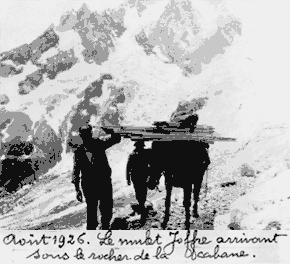 Août 1926. Le mulet Joffre arrivant sous le rocher de la cabane